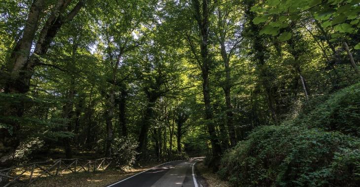 Riparte la stagione silvana 2019/2020 - Agricoltura - Regione Puglia